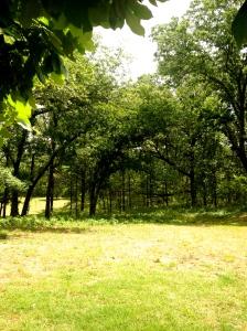Life among the trees.