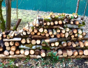 Freshly cut wood for next winter. Always planning ahead!