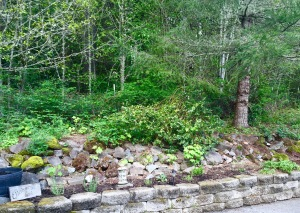 A new herb garden in a forest clearing. Easily accessible to the kitchen unlike the vegetable garden.