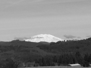 Mt. St. Helens in Skamania County, Washington, viewed from Clark County. 50 miles northeast of Portland.