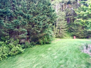 The deceptively steep slope that was the back yard when we first arrived a year ago.